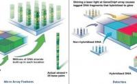 تقنية رقائق الحمض النووي الدقيقة (DNA Microarray) {الجزء الأول}