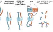 البنية ثلاثية الأبعاد للجينوم