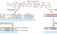 استعمال طريقة RNA-Seq لدراسة نسبة نشاط الجينوم
