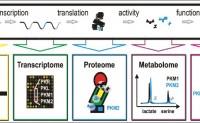 لمحة حول شبكات التفاعل البيولوجي