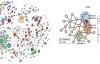 التعامل مع الشبكات الحيوية برمجيا باستعمال لغة الآر