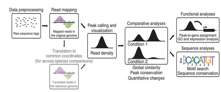 دراسة أماكن ارتباط البروتينات بالحمض النووي باستعمال طريقة Chip-Seq