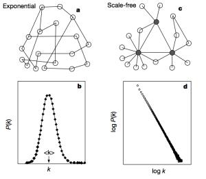 بيان يوضح الفرق بين توزيع درجة العقد في الشبكات العشوائية والبيولوجية