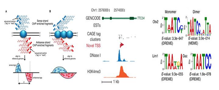 تحليل بيانات الترسيب المناعي ChIP-Seq