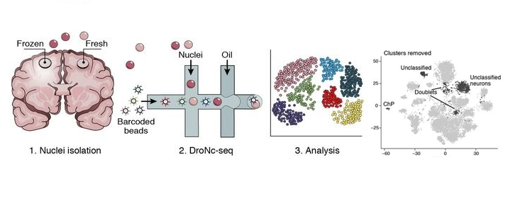 مدخل الى مجال تحليل الخلايا المفردة Sing-cell sequencing (الجزء الاول)