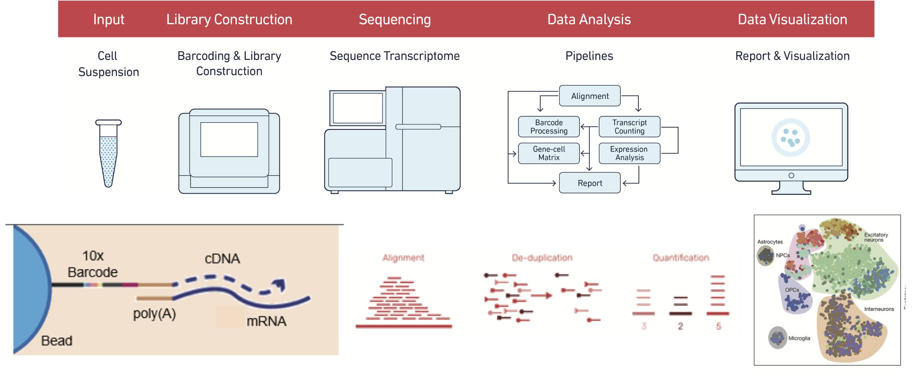 مدخل الى مجال تحليل الخلايا المفردة ( الجزء الثاني)