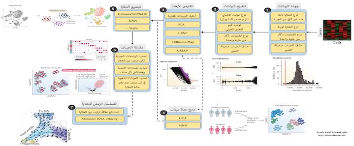 مدخل الى مجال تحليل الخلايا المفردة ( الجزء الثالث)